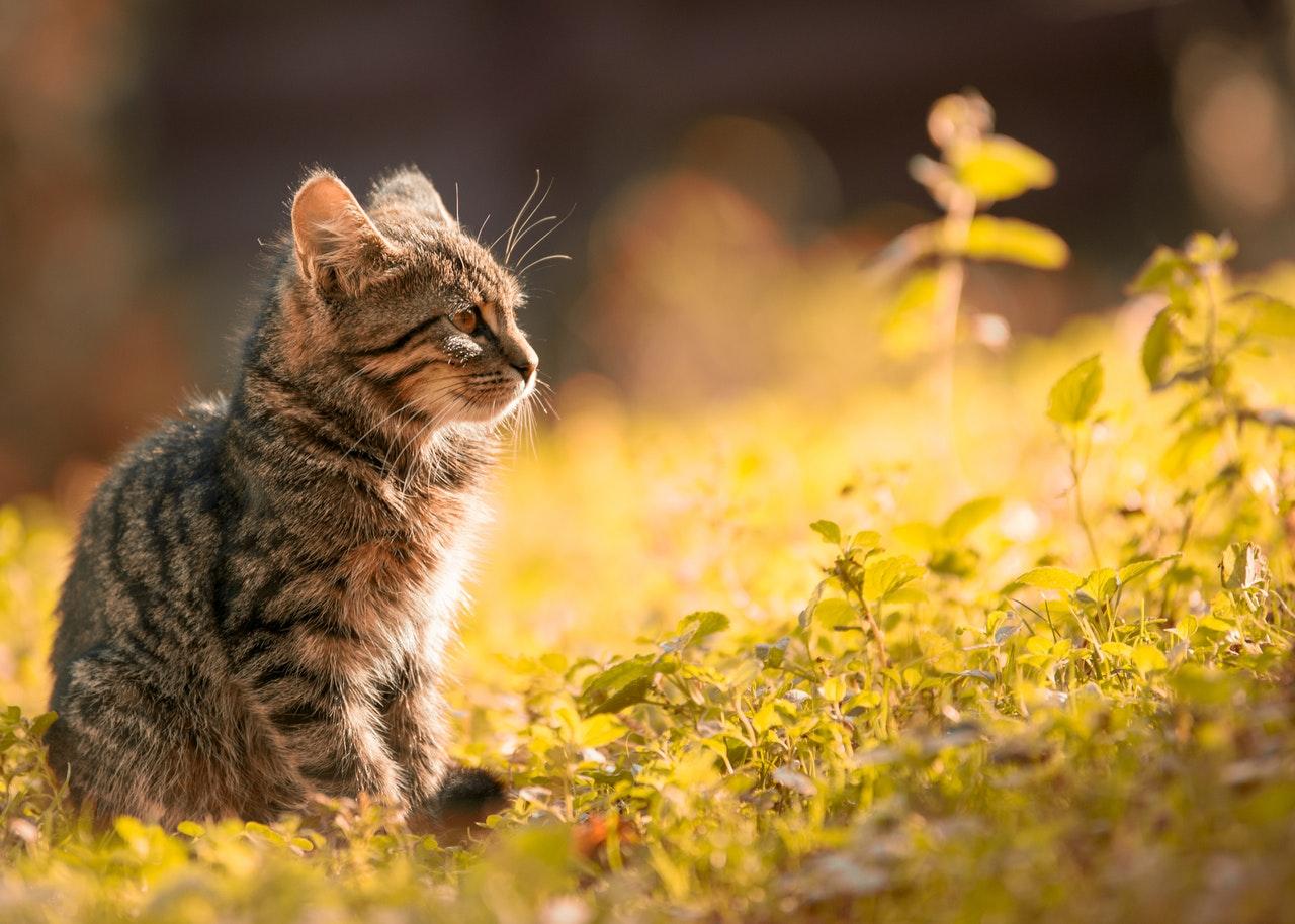 Kattunge som sitter utomhus